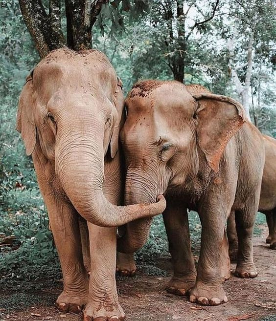 💗 Elephant love ðŸ˜âœ¨