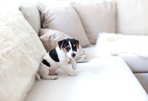 cute puppy + minimal