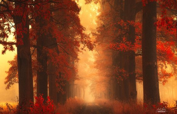 -Mesmerizing poetry of autumn- by Janek-Sedlar.deviantart.com on @deviantART