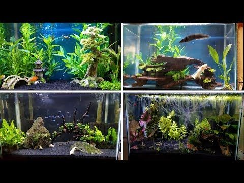 4 Easy Tank Setups For A 20 Gallon Aquarium Youtube Tropical Fish Tanks Aquarium 20 Gallon Aquarium