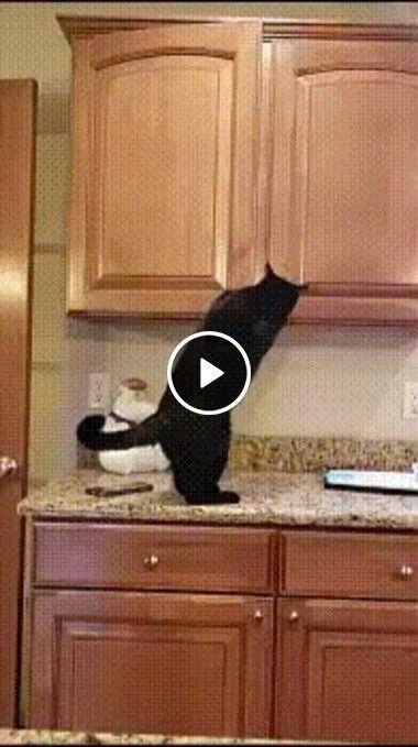 Gato brinca de esconde esconde no lugar perfeito