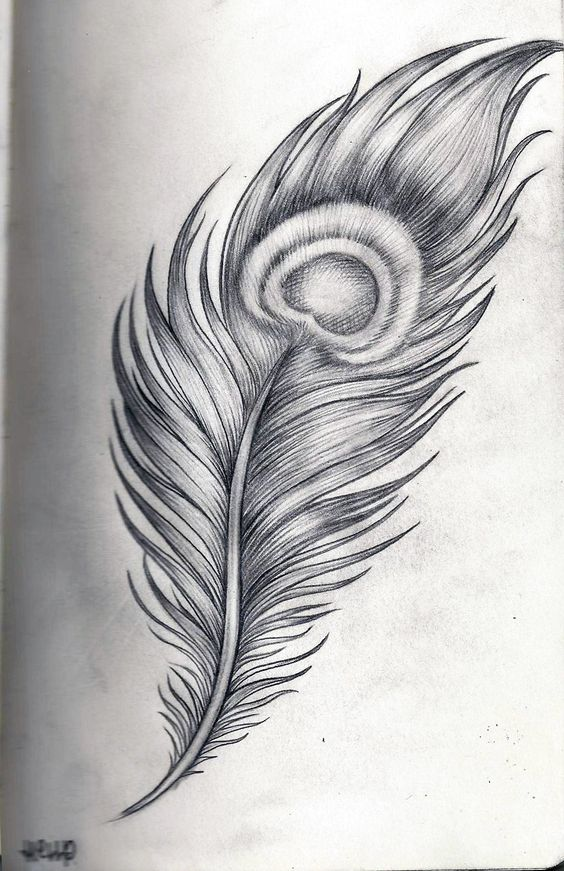 Feathers, Peacock feathers and Feather drawing on Pinterest