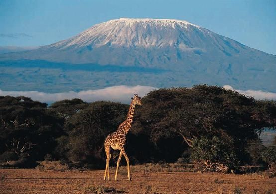 Mt Kilimanjaro. Hoping to climb on the big 50 :-)