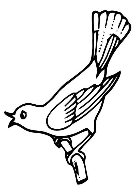 Dibujo Para Colorear Pájaro Cantando Ilustración Imágenes