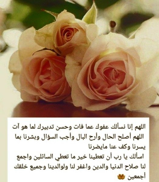 Pin By Laffana On Litrature Flowers Rose Plants