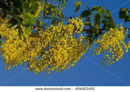 Yellow flowers with blue sky in the background - stock photo