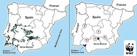 Ecco dove vive la lince iberica/ ©: WWF-Canon
