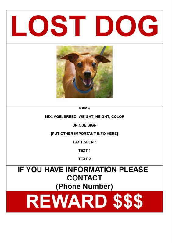 Doc598644 Lost Pet Poster Template 20 Nice Lost Pet Flyer – Missing Reward Poster Template