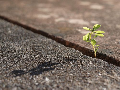 Growing by Strep72, via Flickr