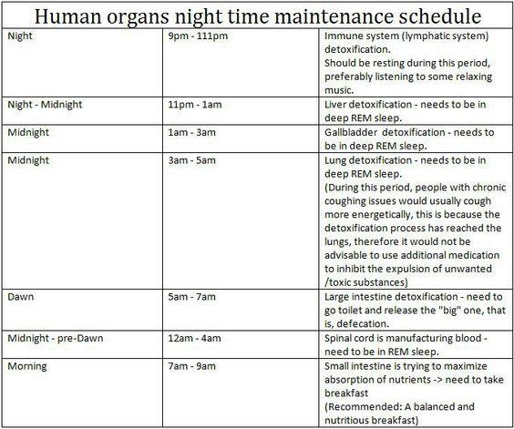 Human organs maintenance schedule health health for Annual garden maintenance schedule