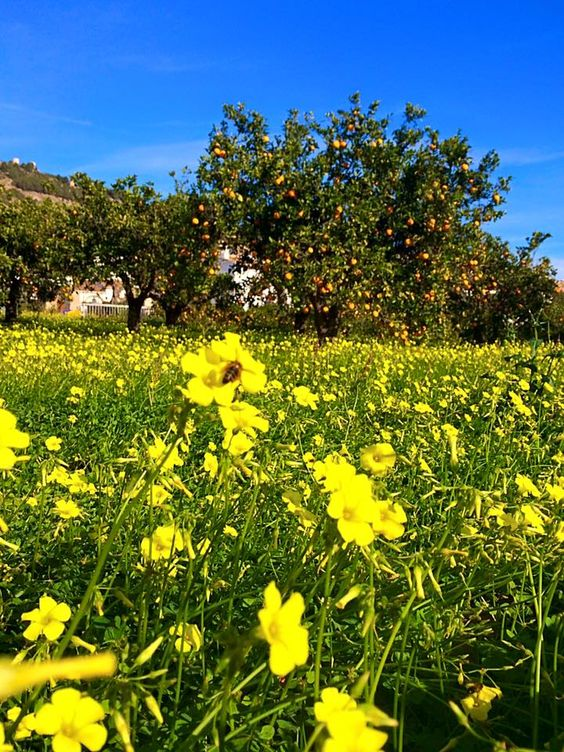 Carpet of Spring blooms in the sun kissed countryside by our yoga & detox villa