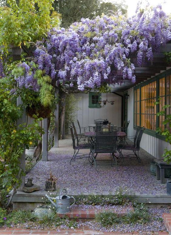Sous l'ombrage épais des wisterias les repas seront vraiment plaisants