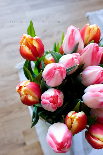 Striped tulips - -