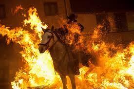Las Luminarias de San Anton Festival - Google Search Las Luminarias de San Anton Festival  Horses are dampened to prevent burning.