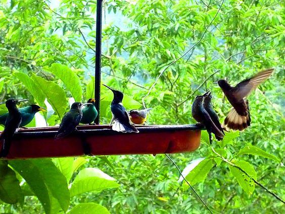 Birds are popular in Buenaventura National Park