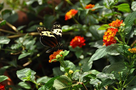 A little butterfly by Alessandro Ionni, via Flickr