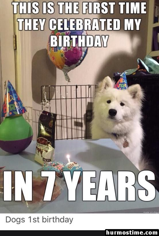 Funny Memes 75 Pics Happy Birthday Dog Meme Happy Birthday Dog Dog First Birthday