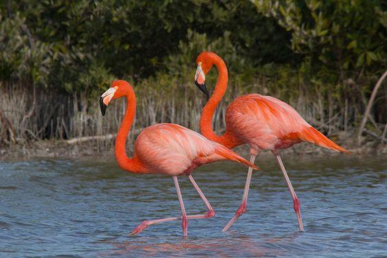 birds of rio lagartos yucatan-112.jpg (1000×667)