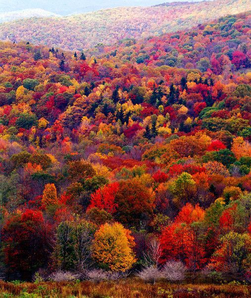 Natures beautiful tapestry. The final colourful celebration of life before a…