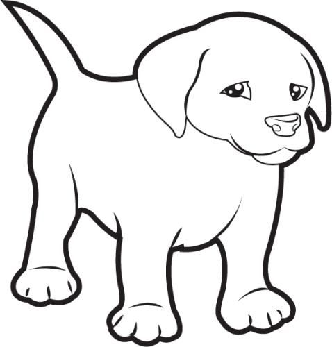Image Result For Puppy Pictures In Black And White With Images