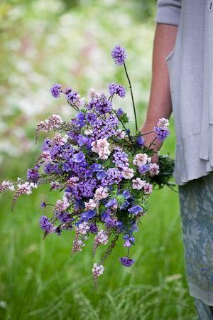•Echium vulgare 'Blue Bedder' (Annual Bugloss) • Linaria 'Canon Went' •Verbena bonariensis
