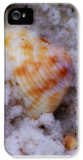 Half Buried Sea Shell iPhone 5 Case / iPhone 5 Cover for Sale by Laurie Pike