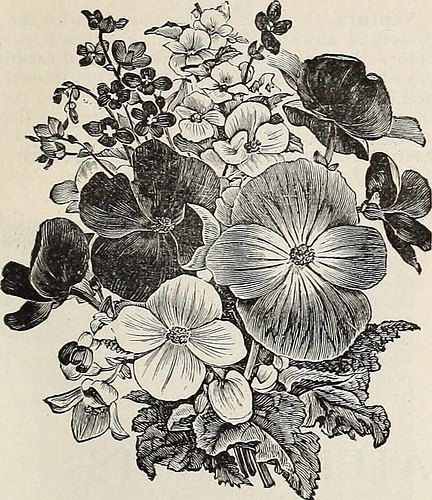 "Image from page 102 of ""Cox seed and plant co. catalogue"" (1896) 