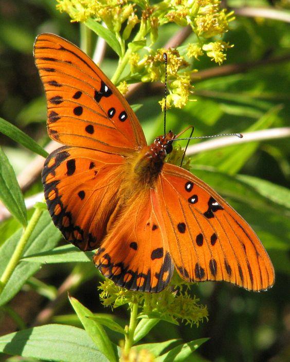 Orange Splendor!