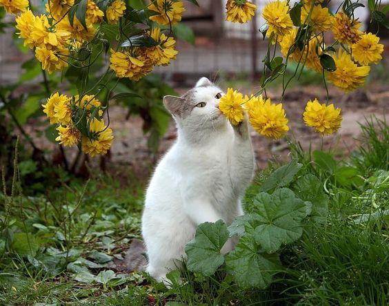 Beautiful Cat playing  in her flower garden.