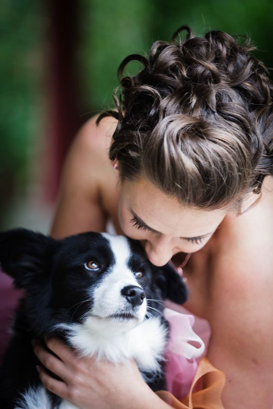 wedding, border collie, dog, love, kiss