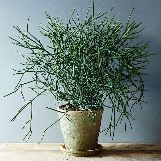 5 No Kill House Plants For Any Home Plante Verte Plante Crayon