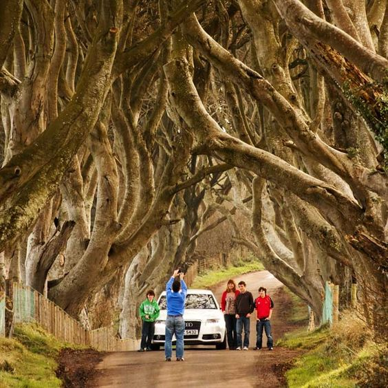 """The Dark Hedges""   County Antrim, Northern Ireland.   by Frank Kavanagh"