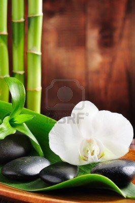 zen bambu orquidea