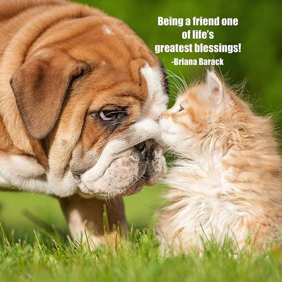 Friendship Quotes Cats: Dog And Cat Friendship Quotes