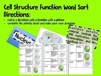cell structure function word sort cards and activity activities plants and student. Black Bedroom Furniture Sets. Home Design Ideas