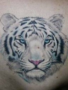 This white tiger tattoo design captures the detail that is needed to catch a white tiger head tattoo design.
