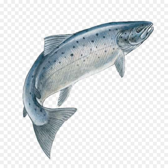15 Fish Jumping Png Fish Jumps Fish Fish Icon