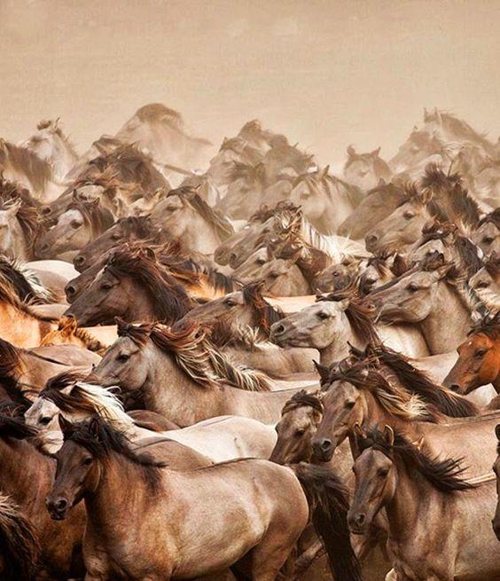 Troupeau chevaux sauvage