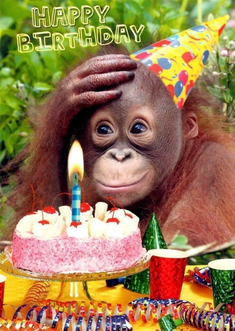 £2.29 GBP - Chimp Birthday Tea Birthday Greeting Card Fun Tracks Greetings Cards #ebay #Home & Garden