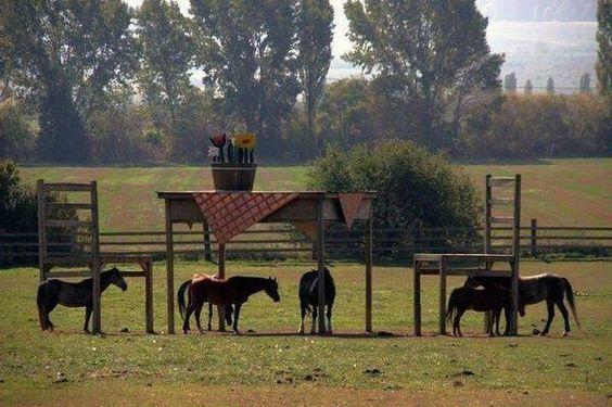 No le dejaban construir un refugio para sus caballos, así que construyó este original mobiliario:)