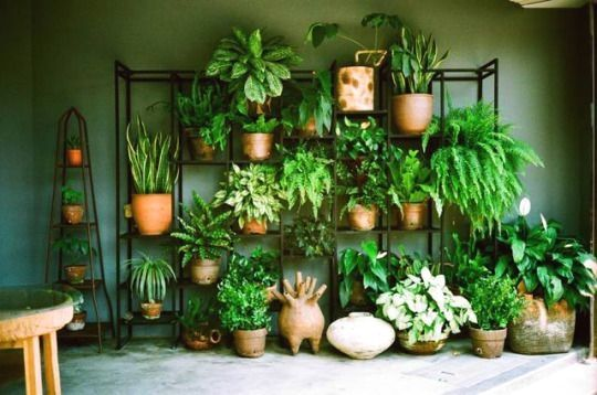 Pin By Home Decor Ideas On Office Plants Best Office Plants