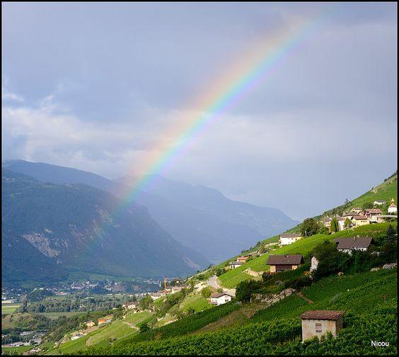 Arc-en-ciel de vignes - Flanthey, Valais