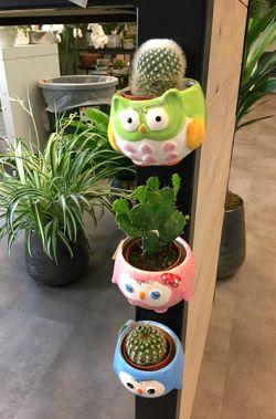 Planten zijn goed voor je gezondheid. In dit artikel leggen we uit waarom en laten we leuke magneetpotjes zien. Kun je het meteen thuis uitproberen.