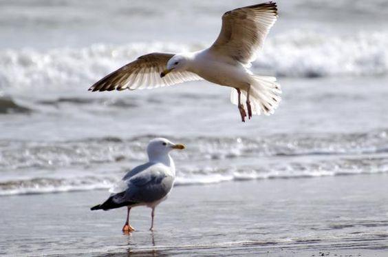 Seagulls #public domain image