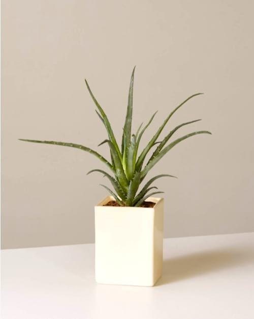 A Quelle Frequence Arroser Les Plantes D Interieur Le Guide