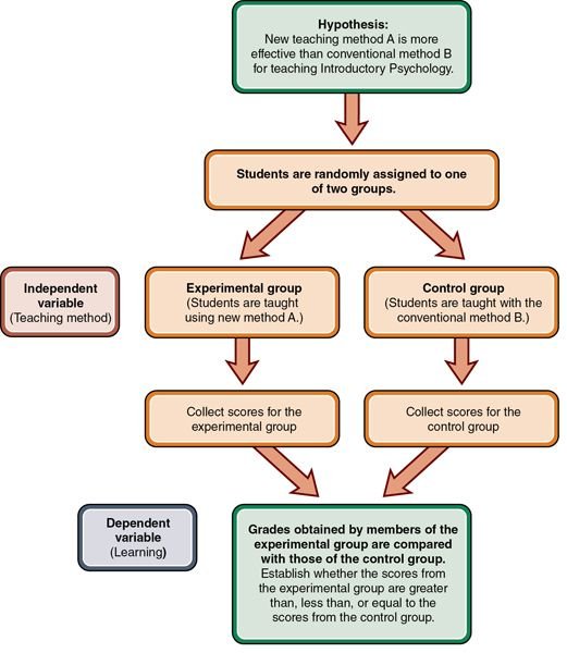 A Flowchart That Shows The Process Of An Experimental Design It Starts With The Hypothesis Next Students Are Assigned To Teaching Method Hypothesis Teaching