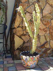 Big Mosaic Pot (dumblady mosaics) Tags: cactus flower golden mosaic mosaics pot euphorbia etsy planter candelabra picassiette dumblady dumbladymosaics