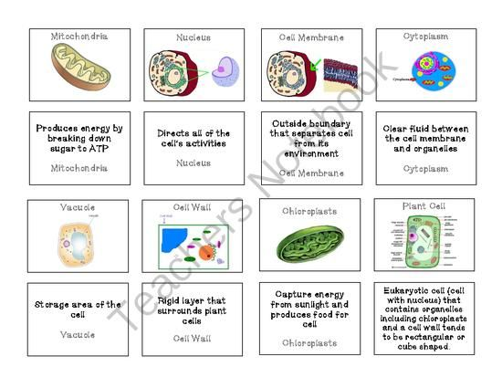 Plant and Animal Cell Organelles Memory Game from Sandys Science – Cells and Organelles Worksheet