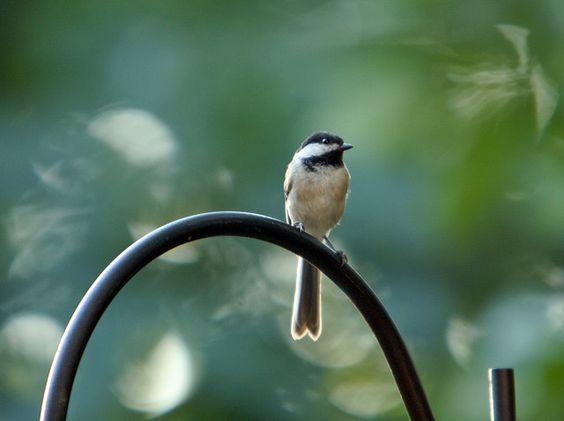 Wings, via Flickr.