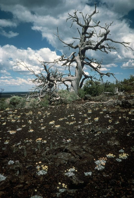 Craters of the Moon National Monument & Reserve in Arco, Idaho